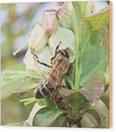 Honeybee In Blueberry Blossoms Wood Print