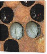 Honeybee Larvae Wood Print