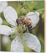Honeybee On A Blackberry Blossom Wood Print
