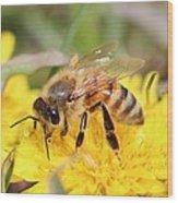 Honeybee On A Dandelion Wood Print