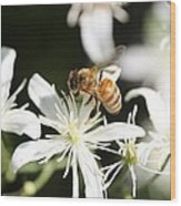 Honeybee On Clematis Wood Print