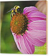 Honeybee On Echinacea Flower Wood Print