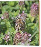 Honeybee On Heal All Wood Print