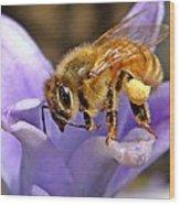 Honeybee On Hyacinth Wood Print