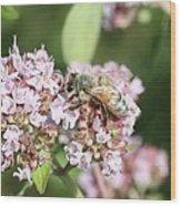 Honeybee On Oregano Wood Print