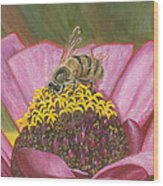 Honeybee On Pink Zinnia Wood Print