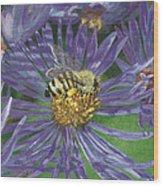 Honeybee On Purple Aster Wood Print