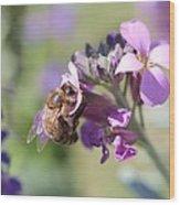 Honeybee On Purple Wall Flower Wood Print