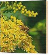 Honeybee On Yellow Wood Print
