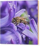 Honeybee Peeking Out Wood Print
