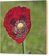 Honeybee Pollinating An Oriental Red Poppy Flower Wood Print