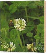 Honeybee Visit Wood Print