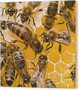 Honeybee Workers And Queen Wood Print
