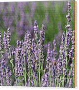 Honeybees On Lavender Flowers Wood Print