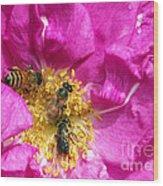 Honeybees On Pink Rose Wood Print