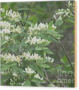 Honeysuckle Blossoms Wood Print