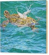 Honu Hawaiian Green Sea Turtle Wood Print