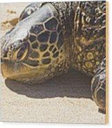 Honu - Hawaiian Sea Turtle Hookipa Beach Maui Hawaii Wood Print