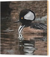 Hooded Merganser 2 Wood Print