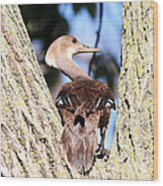 Hooded Merganser Duck Wood Print