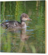 Hooded Merganser Duckling Wood Print