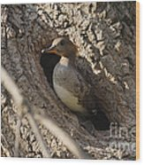 Hooded Merganser Getting Ready To Fly Wood Print
