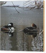 Hooded Merganser Mates Wood Print