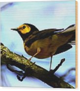 Hooded Warbler - Img 9290-002 Wood Print
