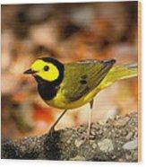 Hooded Warbler - Img 9352-003 Wood Print