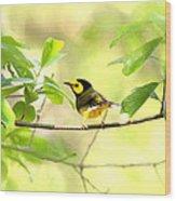 Hooded Warbler - Img_9274-007 Wood Print