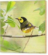 Hooded Warbler - Img_9274-009 Wood Print