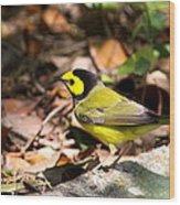 Hooded Warbler - Img_9349-001 Wood Print