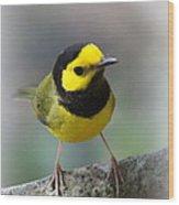 Hooded Warbler - Img_9371-001 Wood Print