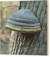 Hoof Fungus (fomes Fomentarius) Wood Print
