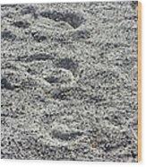 Hoof Prints In Sand Wood Print
