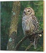 Hootie Barred Owl Wood Print