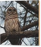 Hootie The Barred Owl A Wood Print