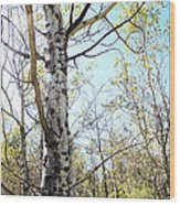 Hope And Growth Wood Print