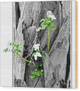 Hope... From Decay New Growth Wood Print