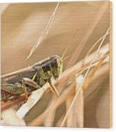 Hopper In Golden Grass Wood Print