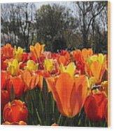 Hopping Hot Tulips Wood Print