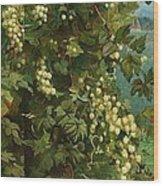 Hops 1882 Wood Print