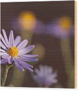 Horay Spine Aster Wood Print