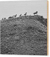 Horizon Horse Wood Print by Paul Bartoszek