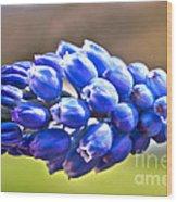 Horizontal Bluebell Wood Print