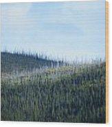 Horizontal Renewal Wood Print