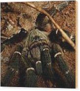 Hornback Baboon Spider Wood Print