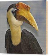 Hornbill 2 Wood Print