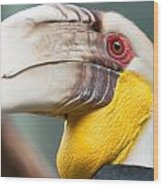 Hornbill Bird Portrait Closeup Wood Print