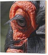 Hornbill Closeup Wood Print